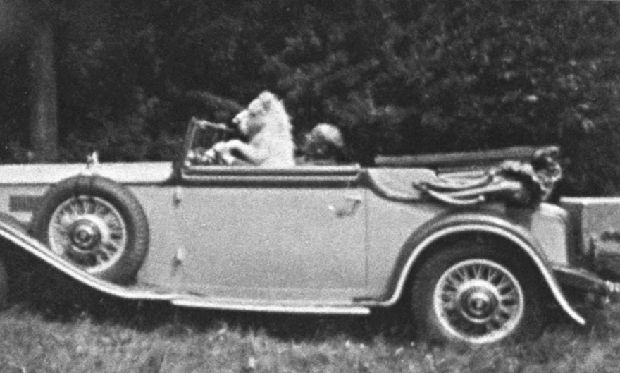 Auch die berühmten javanischen Zwergpferde durften ans Steuer, Broock ca. 1932.